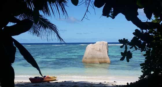 mangrovie-ombra-seychelles